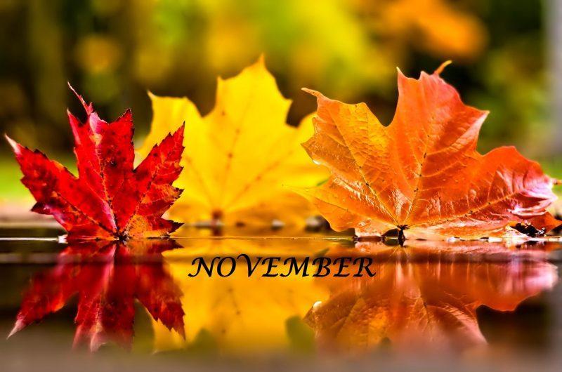 November v MŠ